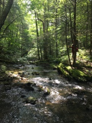 KM walks in a stream in the Catskills